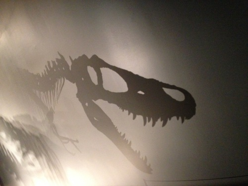 T. Rex shadow at Te Papa by Lee Murray